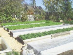 Как оформить грядку-короб для овощей?